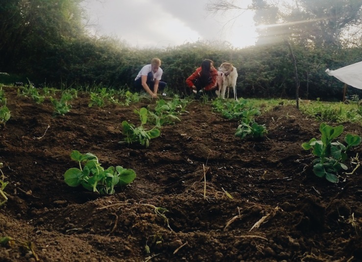 Planting peas and onions with Gavin and Max.JPG