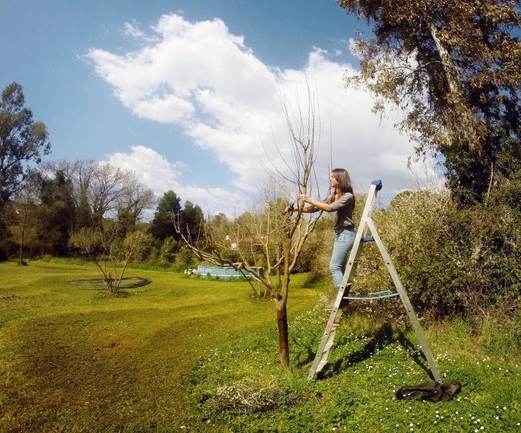 Pruning apple trees copy
